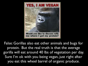 gorilla not vegan.001 001 300x225 Vegan/ Vegetarian Diets   What they cost you and how they can make you fatter.
